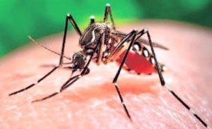 Il pericolo virus Zika