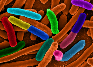 Microbiota intestinale e obesità