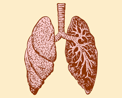 Antibiotici-fibrosi-cistica-Blasi